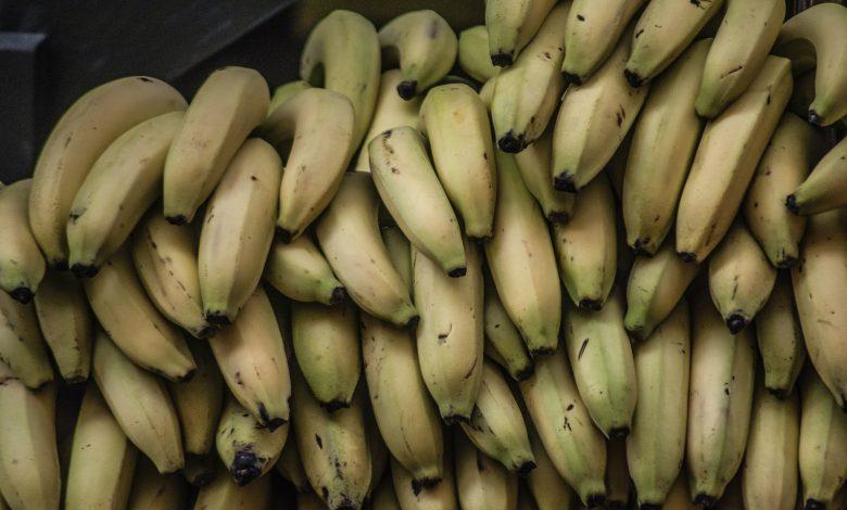 is de bananenplant giftig