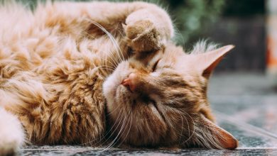 Photo of De beste kattenverjager