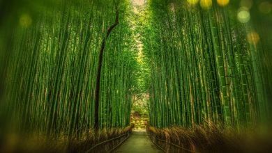 Photo of 4 manieren om bamboe te gebruiken in je interieur